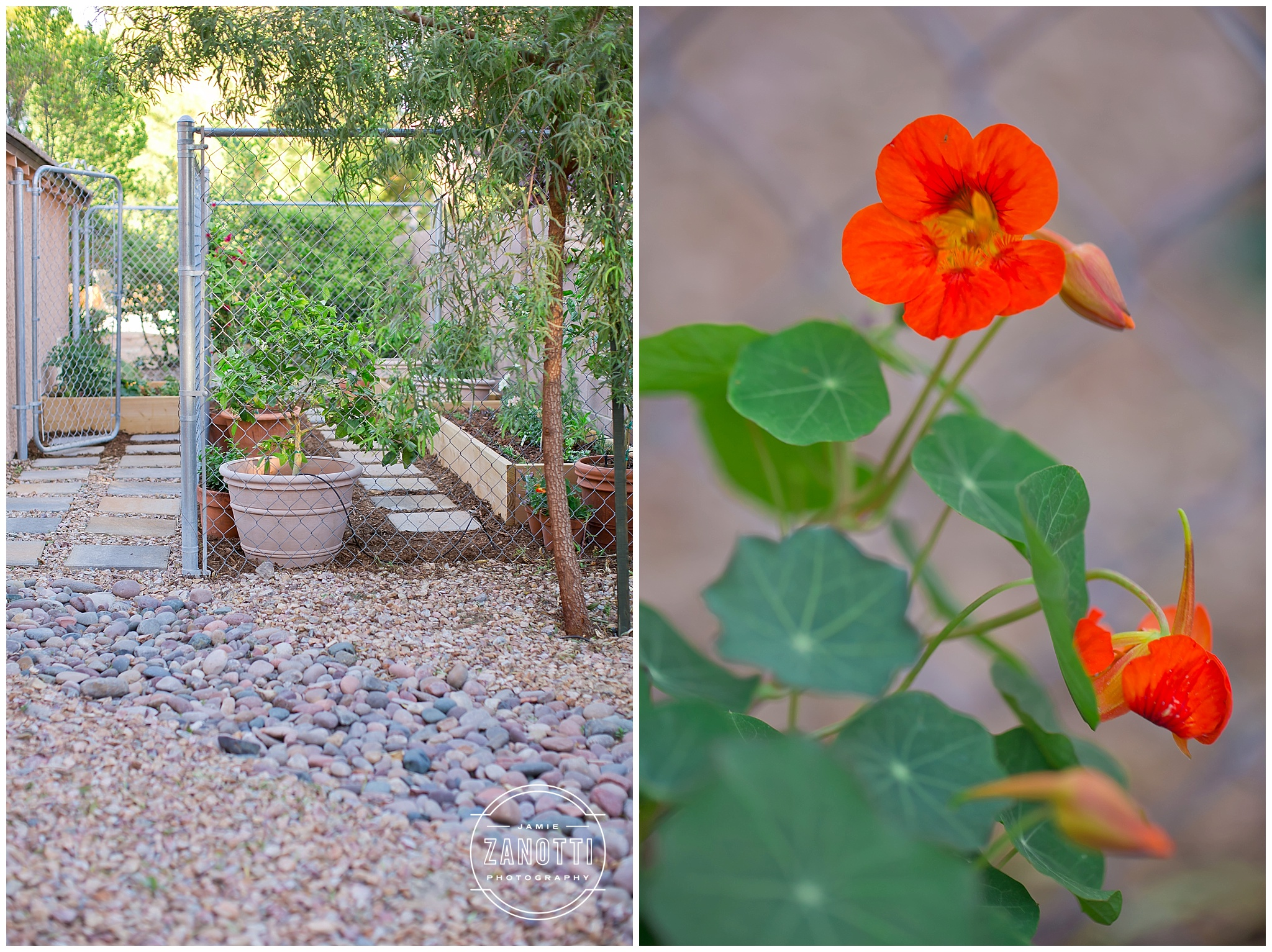 Las Vegas Roots Desert Gardening Lifestyle Blogger Jamie Zanotti Photo 11