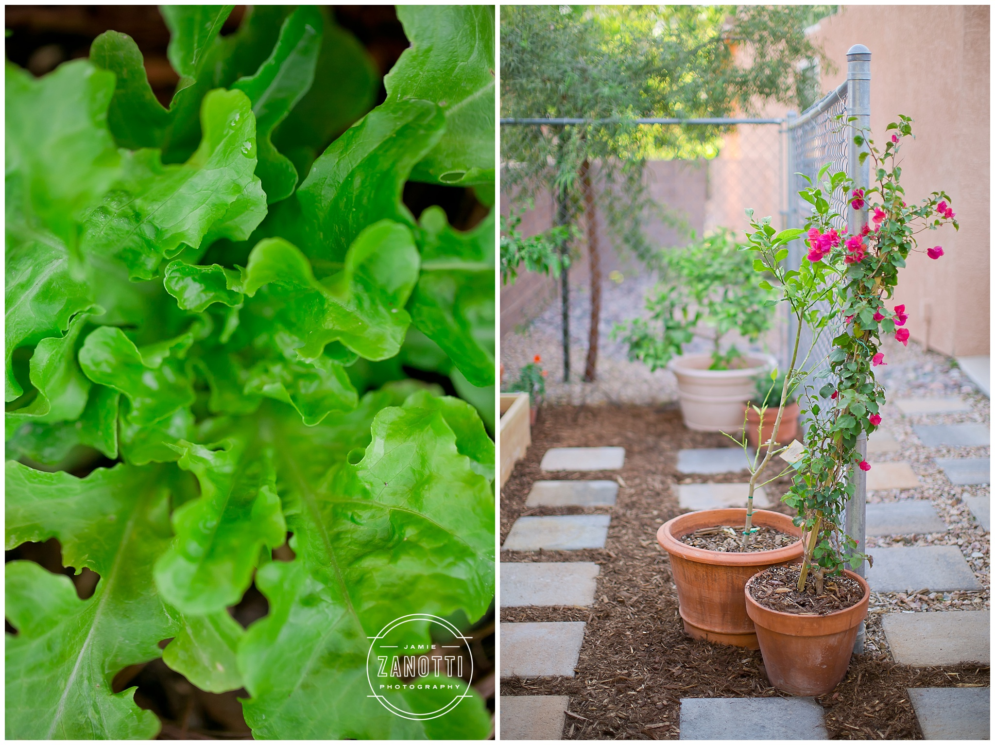 Las Vegas Roots Desert Gardening Lifestyle Blogger Jamie Zanotti Photo 12